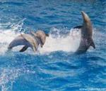 ÐoLpHiNs ImAgEs