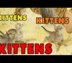 Kittens, Kittens and Kittens! - Episode 5