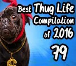 Best Thug Life Compilation of 2016 Part 79