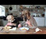 Two dogs eating