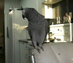 Beatboxing Parrot